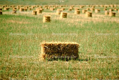 19+ Where can i buy straw bales near me ideas in 2021