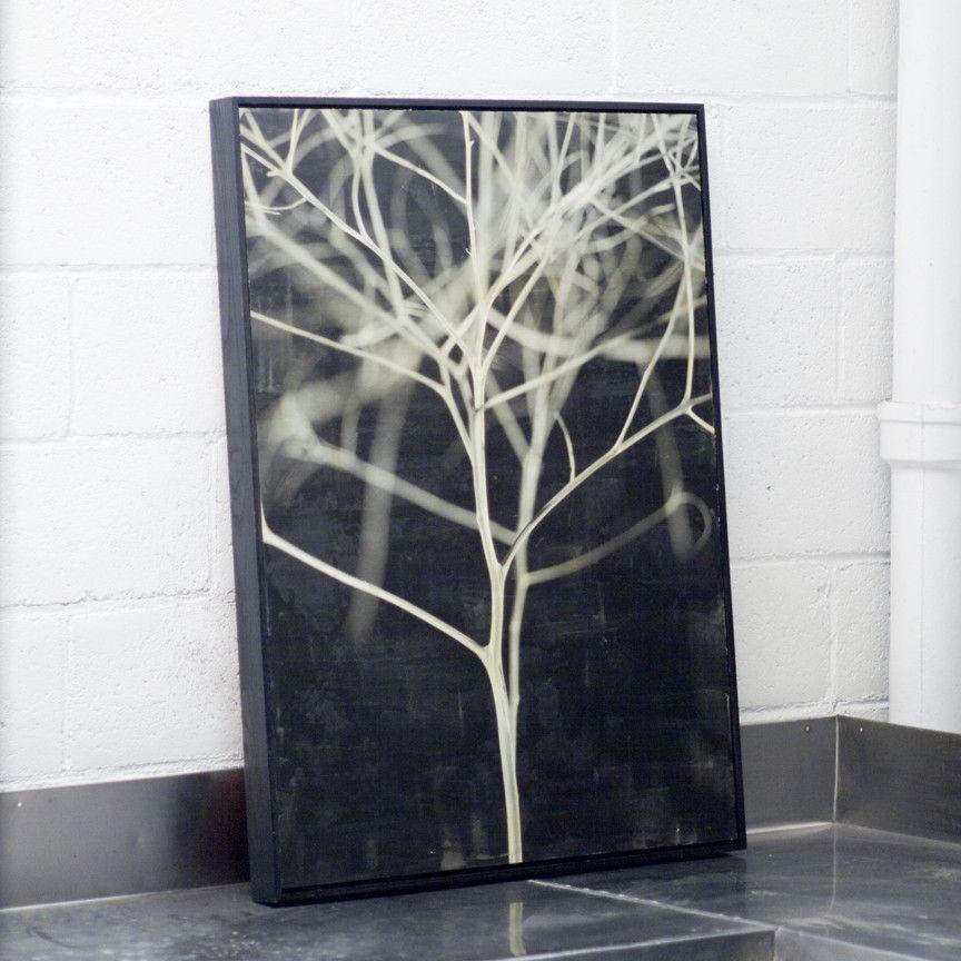 Branch B Print Phylum Design Wall Art Art Design