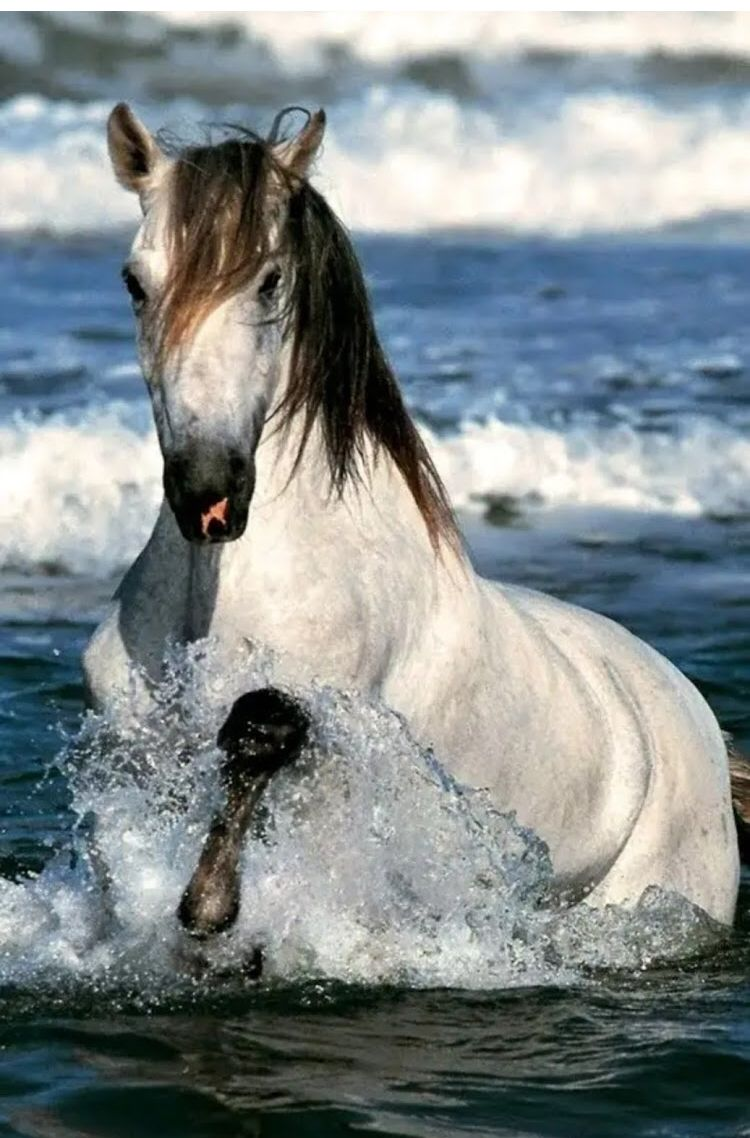 Pin By Isparkle Marketing On Cavalos Horses Beautiful Horses Pretty Horses