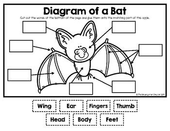 Bat Diagram by The Kindergarten Creator | Teachers Pay ...