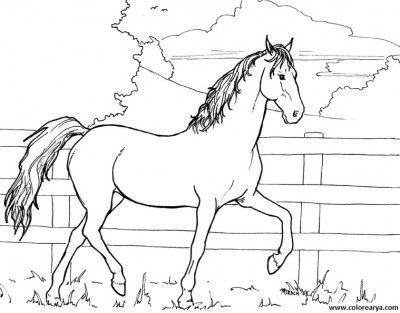 fotos de caballos para imprimir | caballos | Caballos pintados