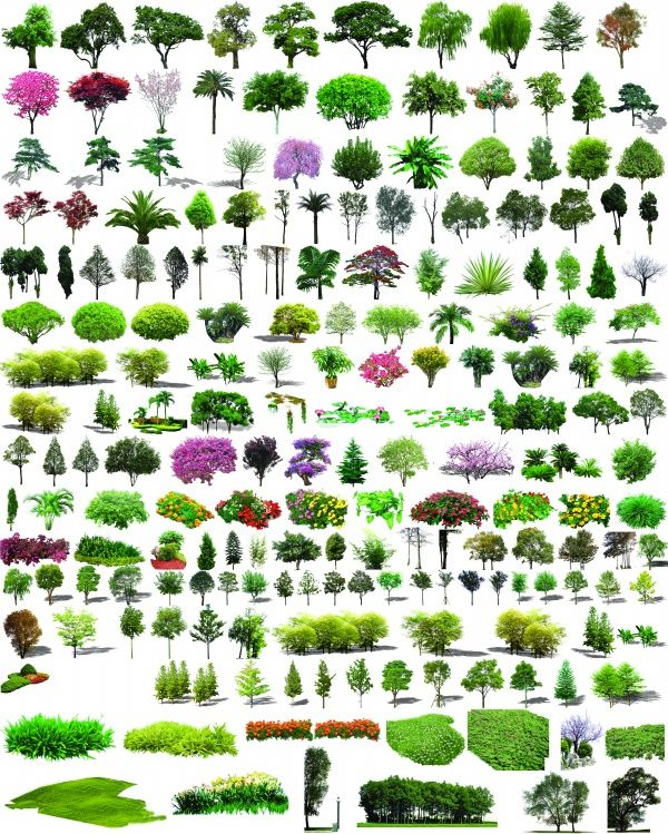 Garden Plant Shrub Psd Layered Material For Free Download Garden