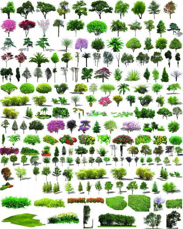 Garden Plant Shrub Psd Layered Material Garden Trees Plants Tree Psd
