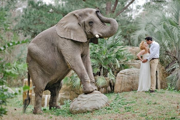 Unique Wedding Photography Ideas Http Www Pashabelman Com Safari Hochzeit Geldspiele Just In Case
