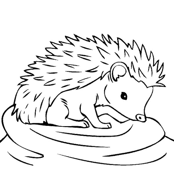 Baby Hedgehog Feeling Thirsty Coloring Pages Bulk Color Animal Coloring Pages Hedgehog Colors Hedgehog Drawing