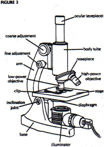 Diagram Of Microscope Parts And Function Microscope Parts