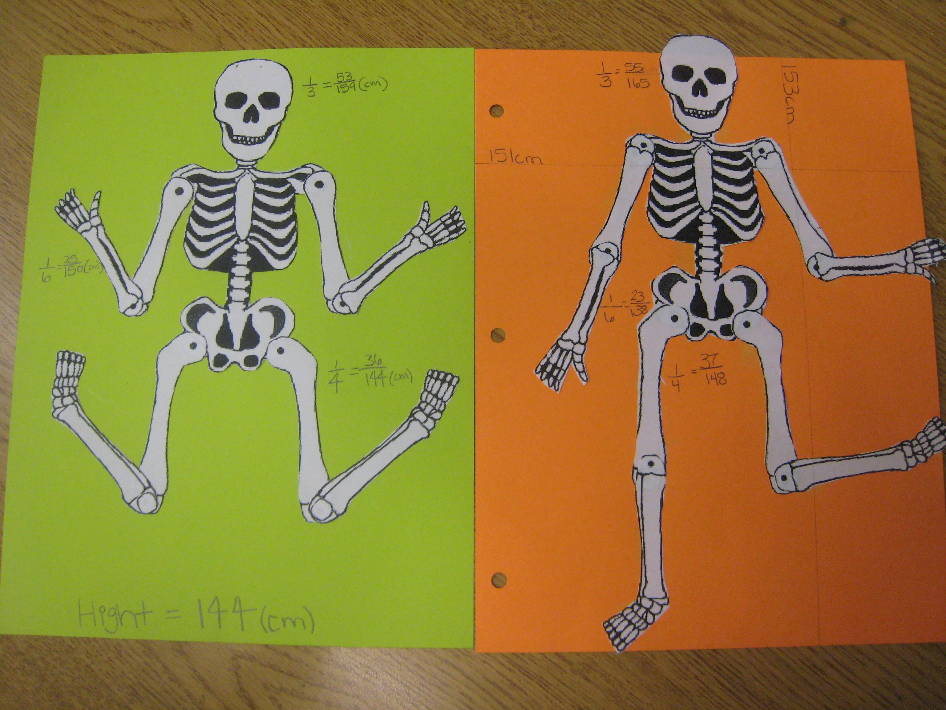 No Bones About It Students Measured Their Bones And