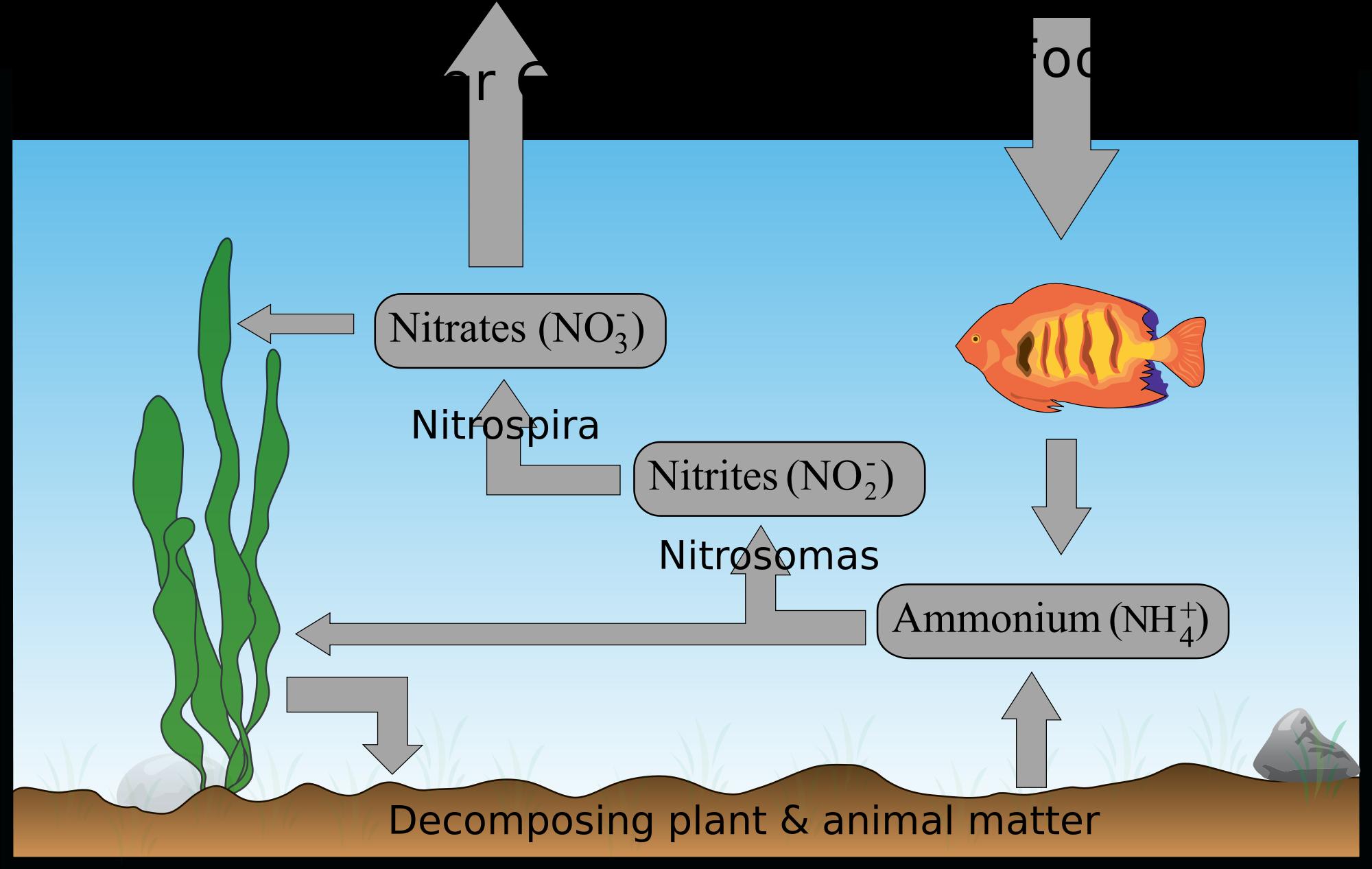Aquarium Cycle Why How You Should Do It Nitrogen Cycle Aquarium Fish Tank
