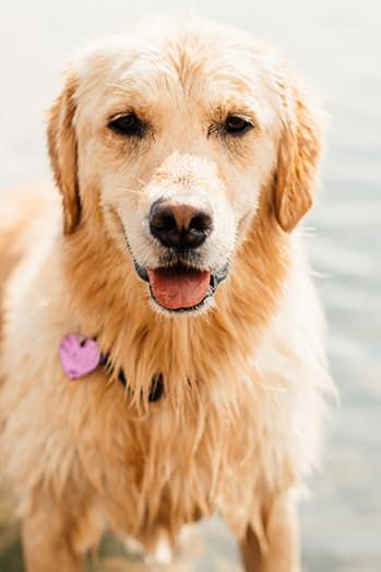 The 19 Most Popular Dog Names In The Country Female Dog Names