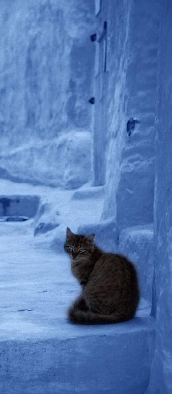 kitty in periwinkle courtyard~Greece