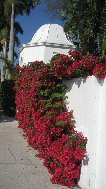 9e66df29d5a95bfe9198dcd79cf6aa0b - Carmine's Florist Palm Beach Gardens