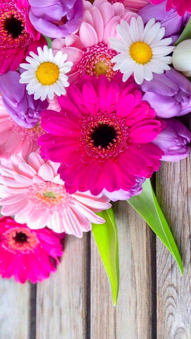 Wallpaper Iphone Gerberas Haciendo Felicidad Pinterest