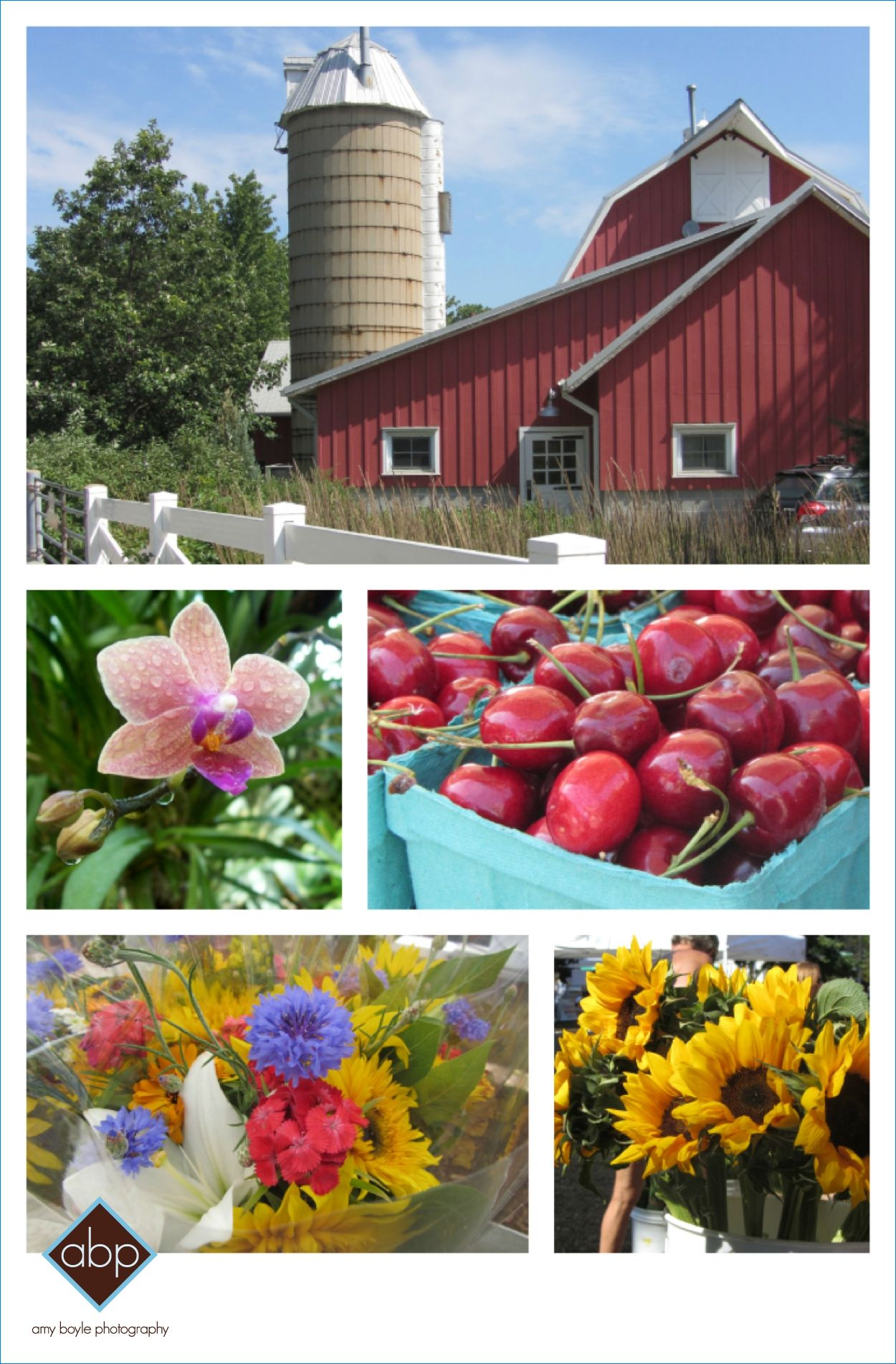 Lincoln Park in the summer - Farm in the Zoo, Conservatory, and Green City Market! ©Amy Boyle Photography 2012