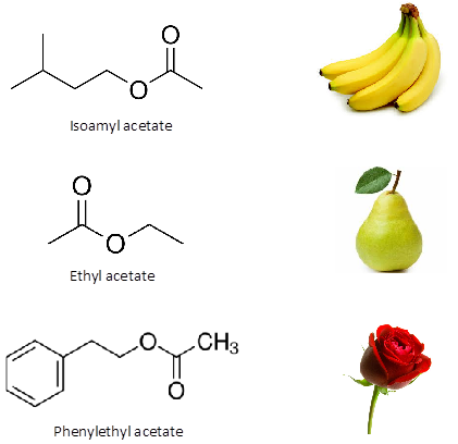 Ester aroma compounds in wine and their real-life aromas | Flint ...