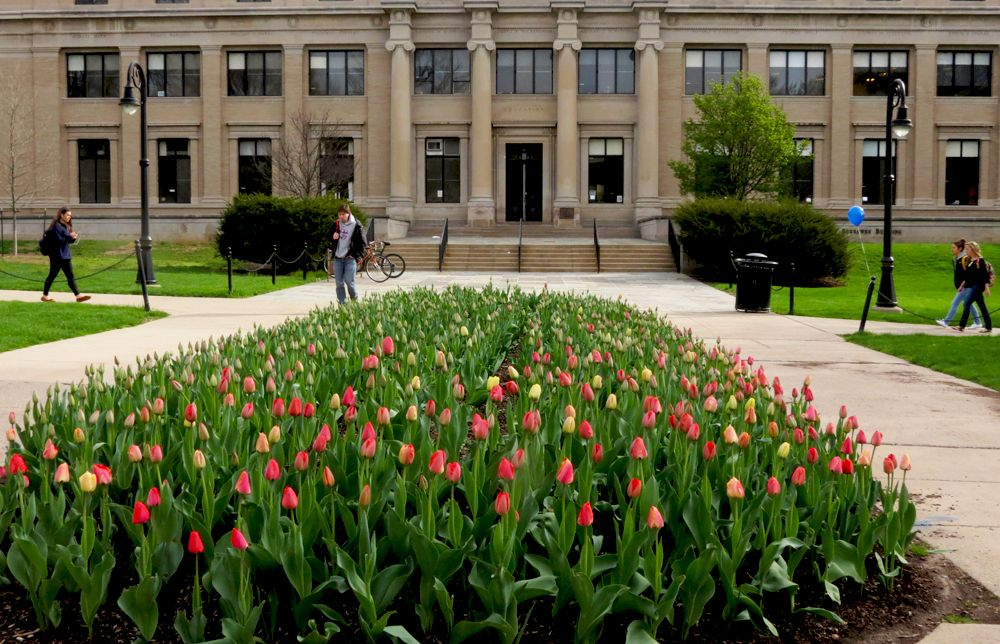 PENN STATE – CAMPUS – 4/22/13 tulips on the Pattee Mall