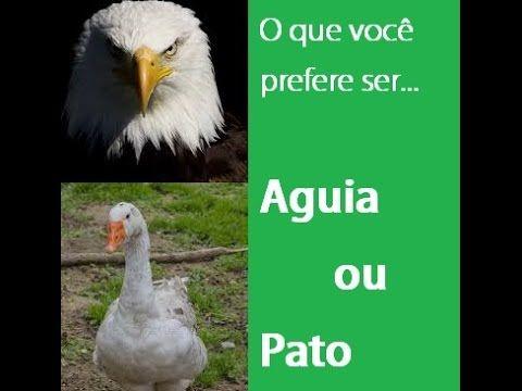 O que você prefere ser.....Águia ou Pato??