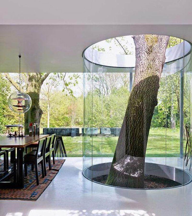 Rbol cocina troncos dentro de casa hogares diferentes for Arbol interior
