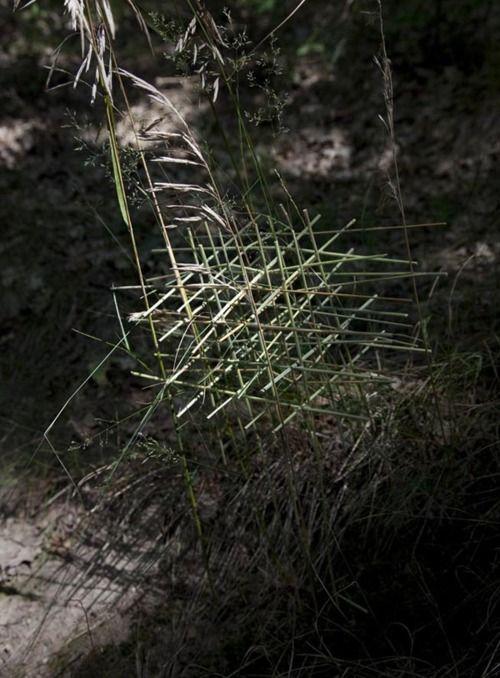 """""""Grid"""", 2009 by Elsbeth Diederix."""