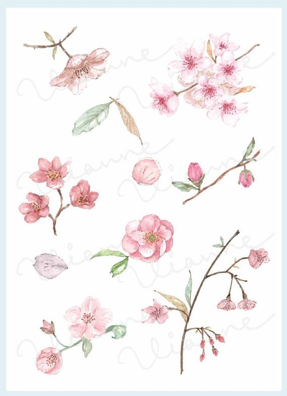Clip Art Watercolor Vintage Cherry Blossom Set 10 Images Digital Download Flower Nature Flower Tattoos Watercolor Flowers Lower Back Tattoos