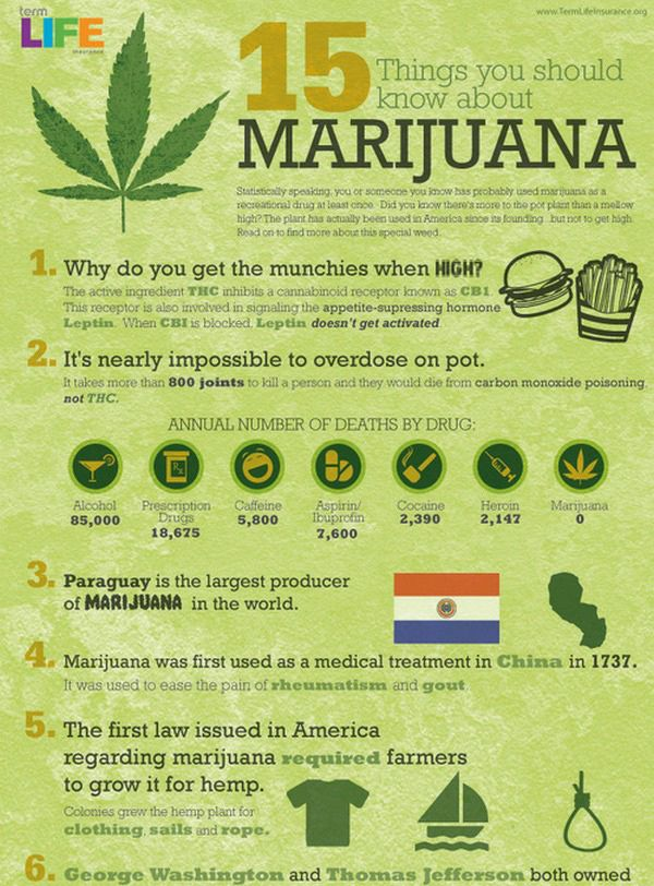 beer and stupidity  15 facts about marijuana