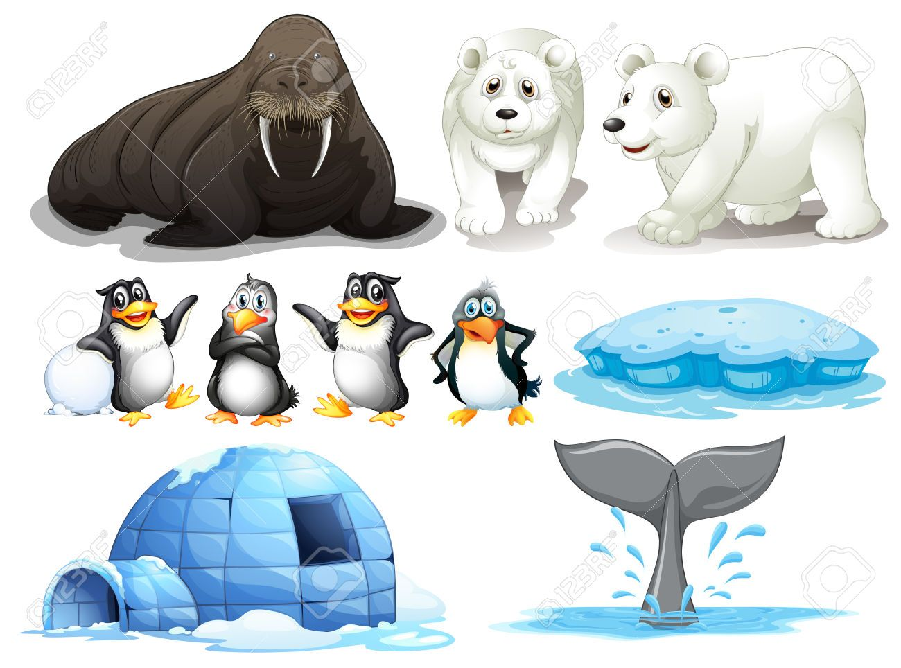 Ilustracion De Los Diferentes Animales Del Polo Norte