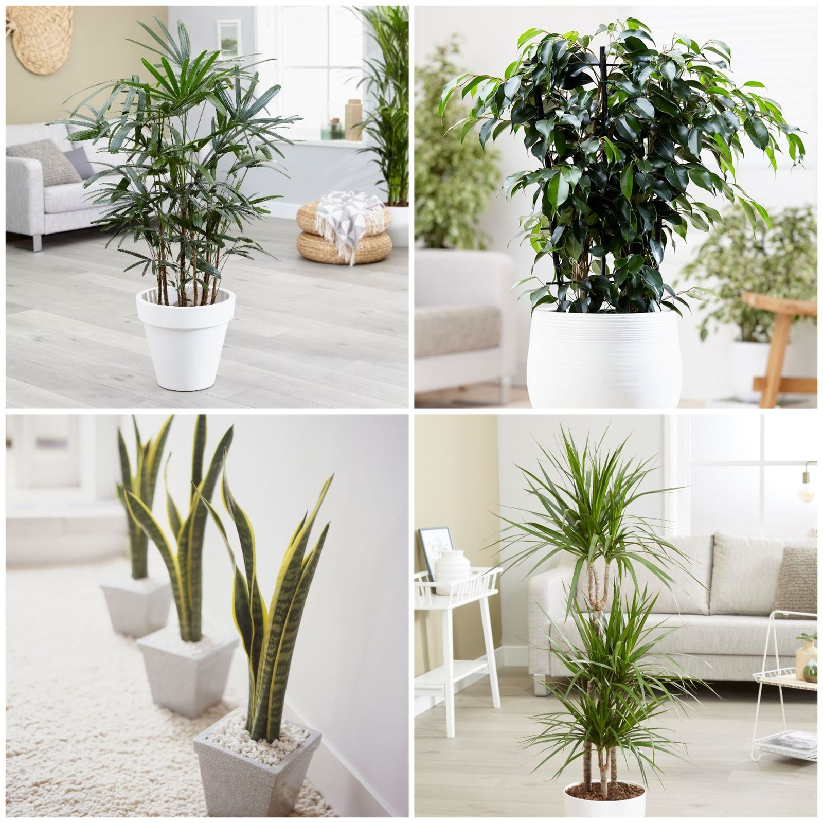 10 best air purifying plants for the home Air purifying