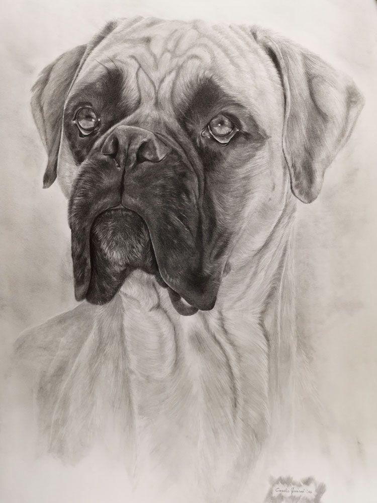 Disegno Cane Bianco E Nero.Disegno Di Un Cane In Bianco E Nero Disegno A Matita