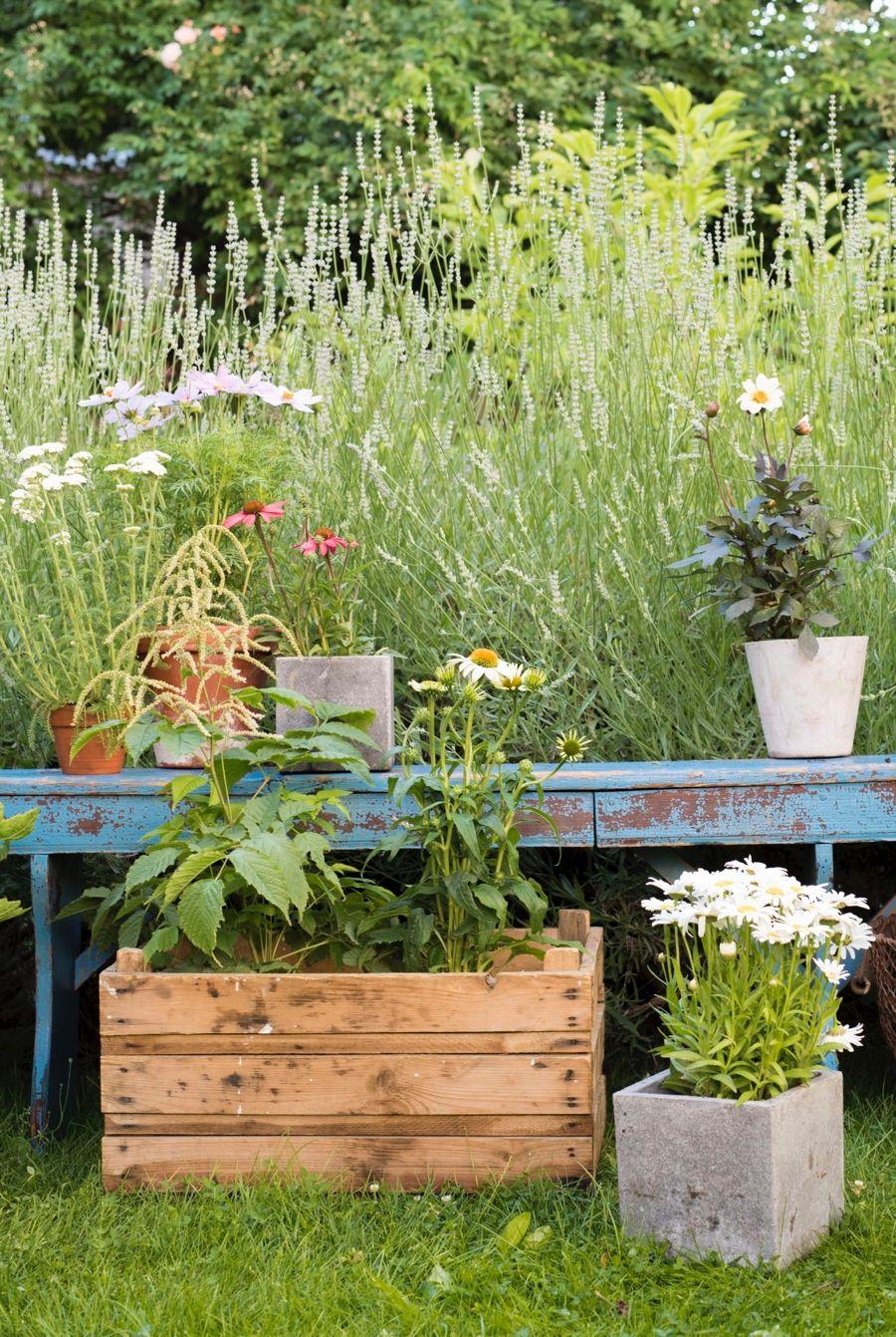 Journee De L Environnement 9 Eco Gestes Au Jardin Jardins
