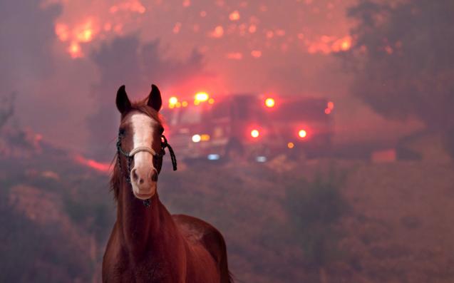 California Fires Horses, California wildfires, Animals