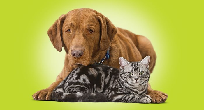 Cat And Dog Swimming Safety Tips Dog Swimming Pets Pet Safety