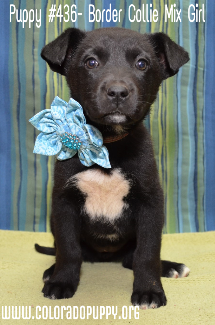 Puppy Love Colorado Puppy Rescue Pinterest Puppies Puppy Love