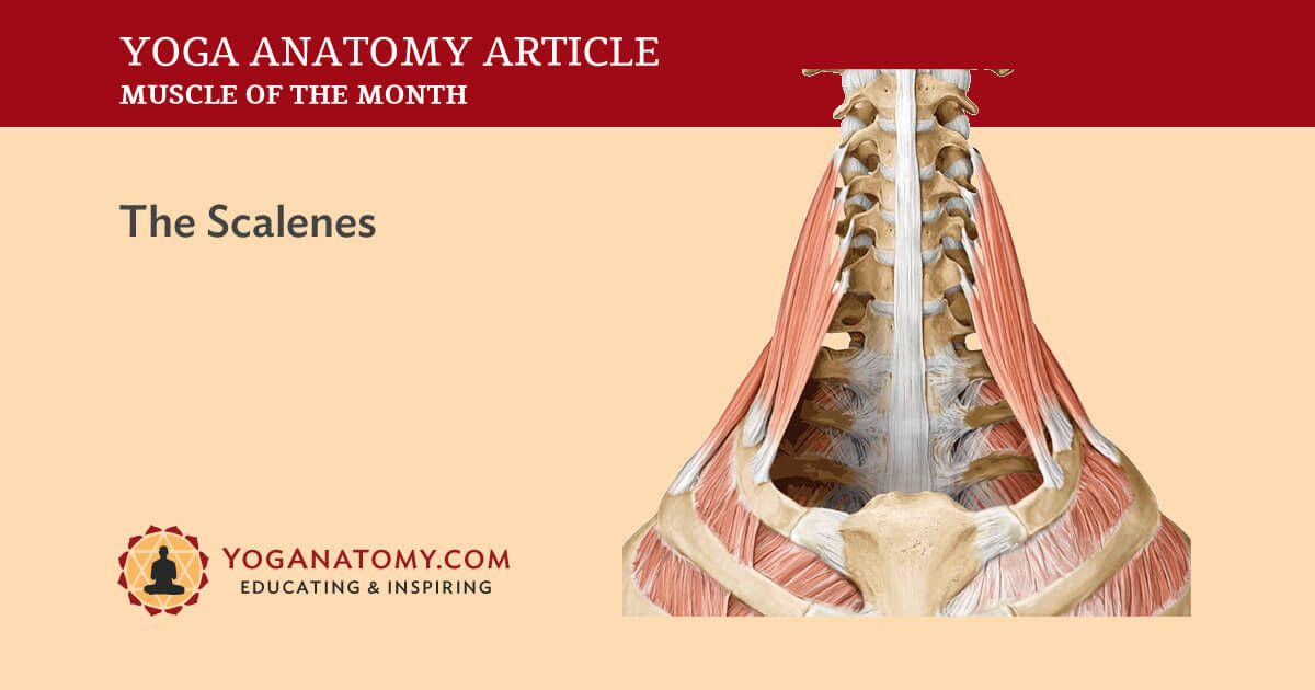 This Month David Highlights The Scalene Muscles Learn Where This