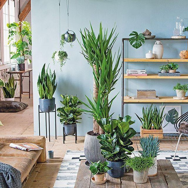 De grote Yucca laat zich goed combineren met kleinere planten in de ...