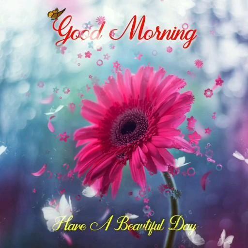 Wonderful Good Morning Flowers Video, Good Mood, Flowers, Beautiful Video
