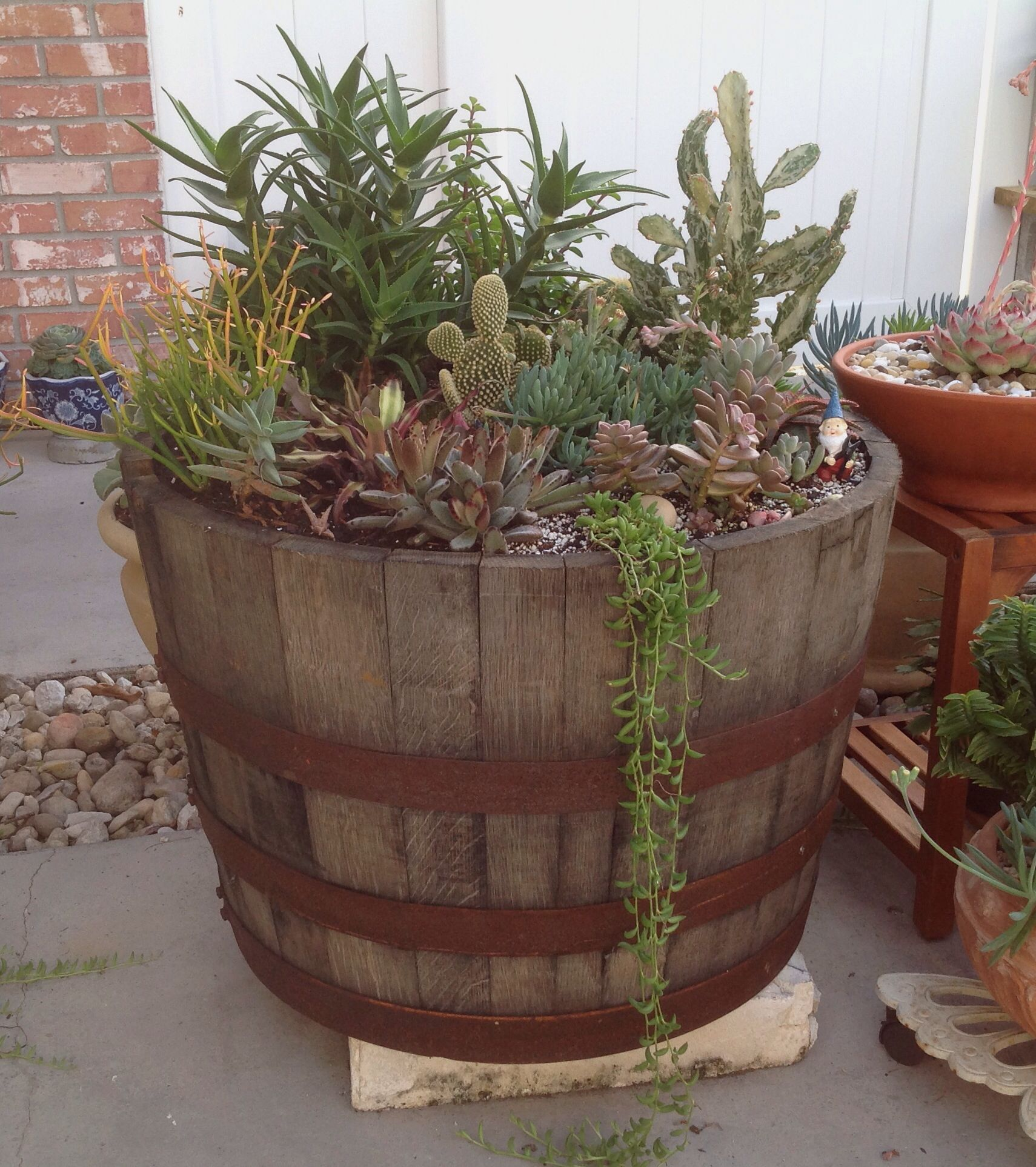 Succulents in a whiskey barrel | My Garden | Pinterest | Whiskey ...