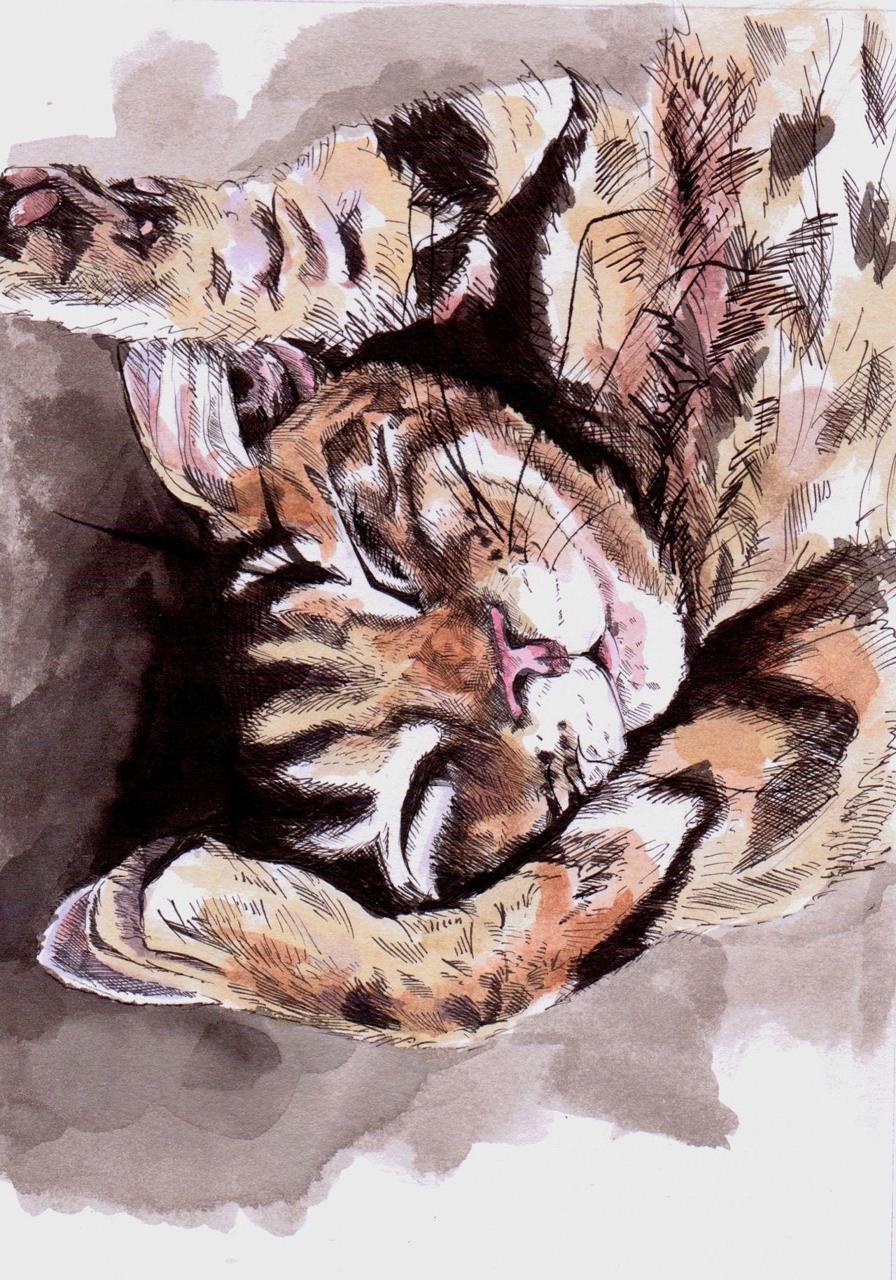 cat illustration | Tumblr