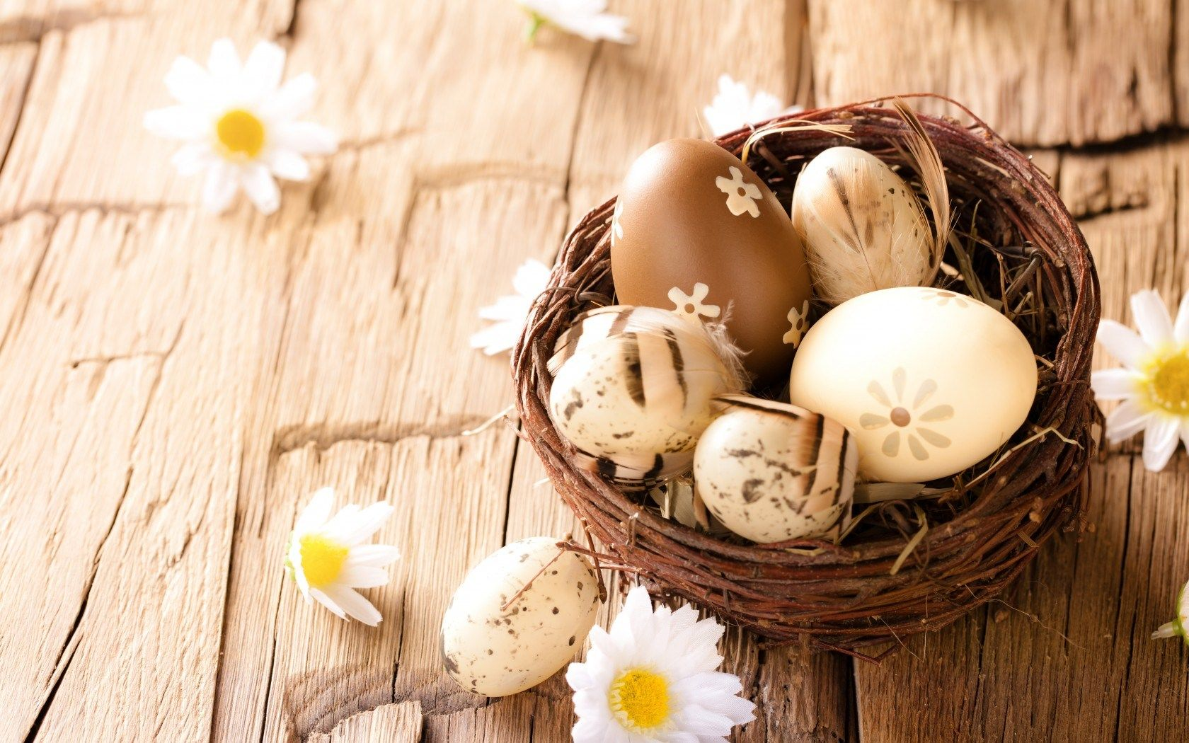 Easter Eggs Daisies Flowers Hd Wallpaper Freehdwall Com Free Hd Wallpapers For Your Desktop Easter Photography Easter Sunday Happy Easter Sunday
