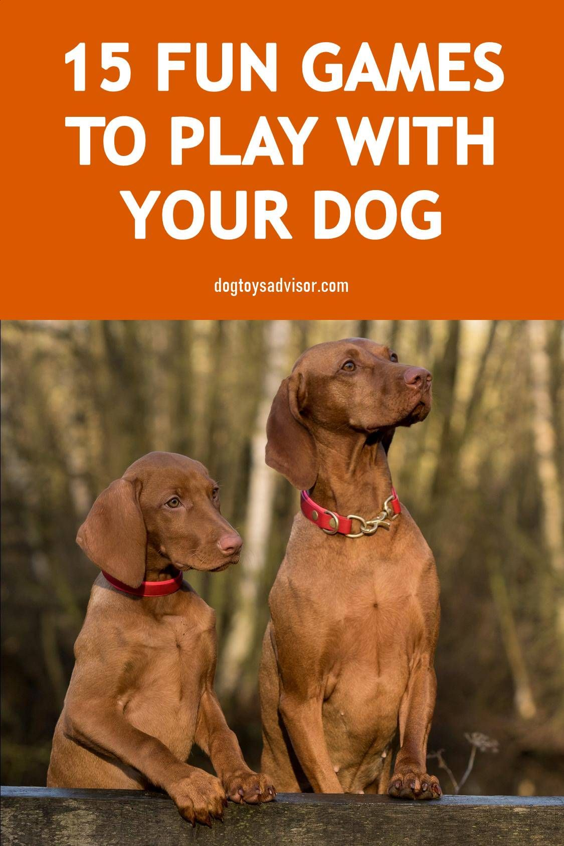 Looking for simple and fun games to play with your dog