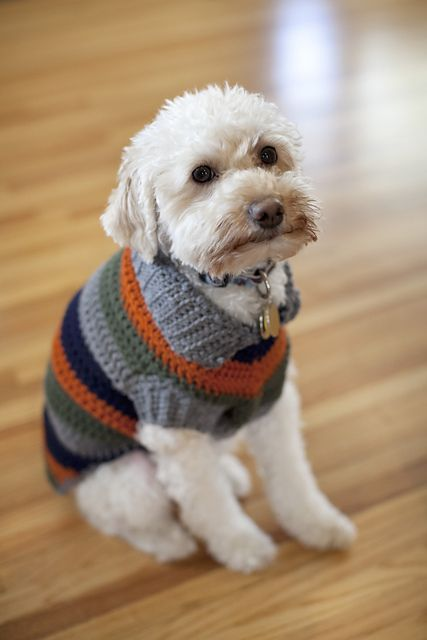 A Bright And Bold Fun Striped Dog Coat Free Crochet Pattern