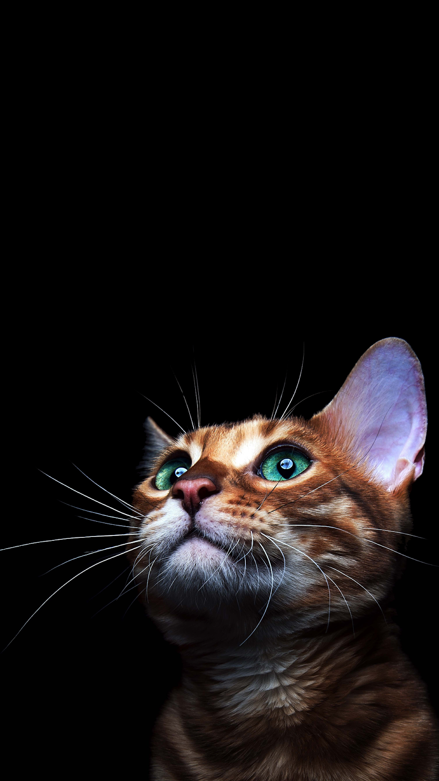 4k Cat Amoled Phone Wallpaper In 2020 Cute Cat Wallpaper Cat Wallpaper Cat Aesthetic