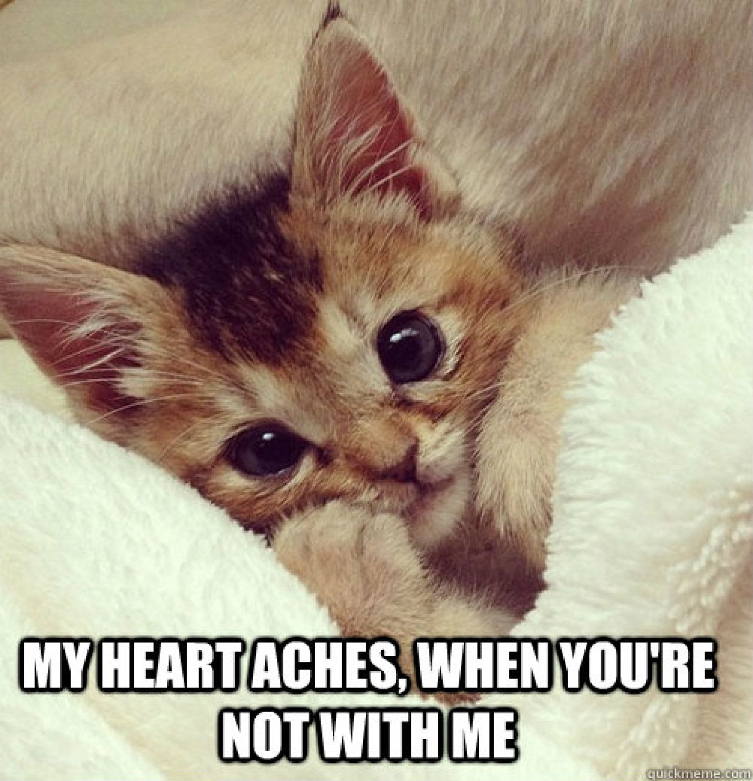 Pin By Jbbiggdogg1975 On L 3ve Cats Kittens Cutest Cute Animals Baby Animals