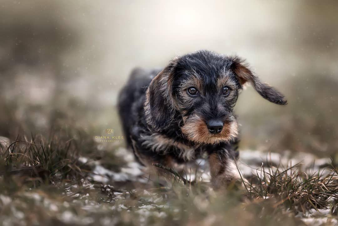 Hundefotografie Im Markischen Kreis Und Nrw Diana Klee Fotografie Hundefotografie Dackel Bilder Hunde