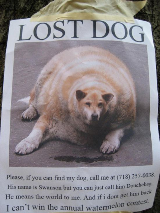 Pin By Hanna Park On Hahah Losing A Dog Losing A Pet Dogs