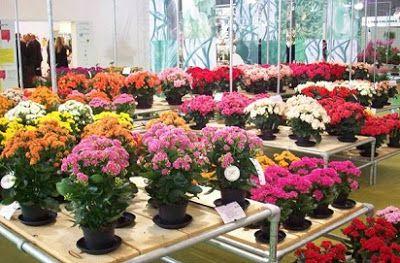 Mengenal Lebih Dalam Jenis Tanaman Hias Bunga Dan Ciri Cirinya Tanaman Bunga Kebun