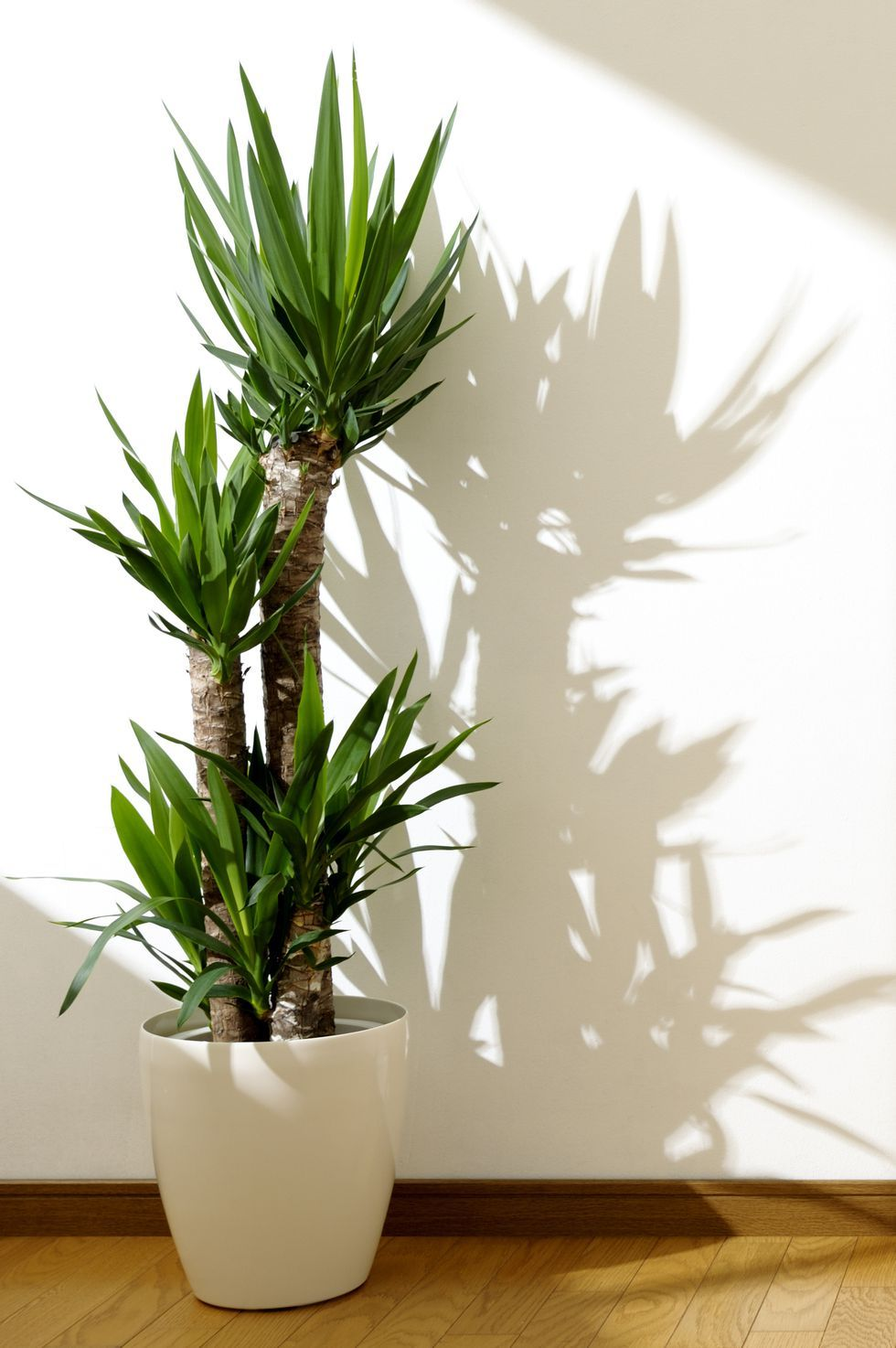 These 30 Indoor Plants Are Almost Impossible to Kill is part of House plants decor, Yucca plant, Best indoor trees, House plants indoor, Indoor trees, Plant decor - These sturdy beauties can handle a little neglect
