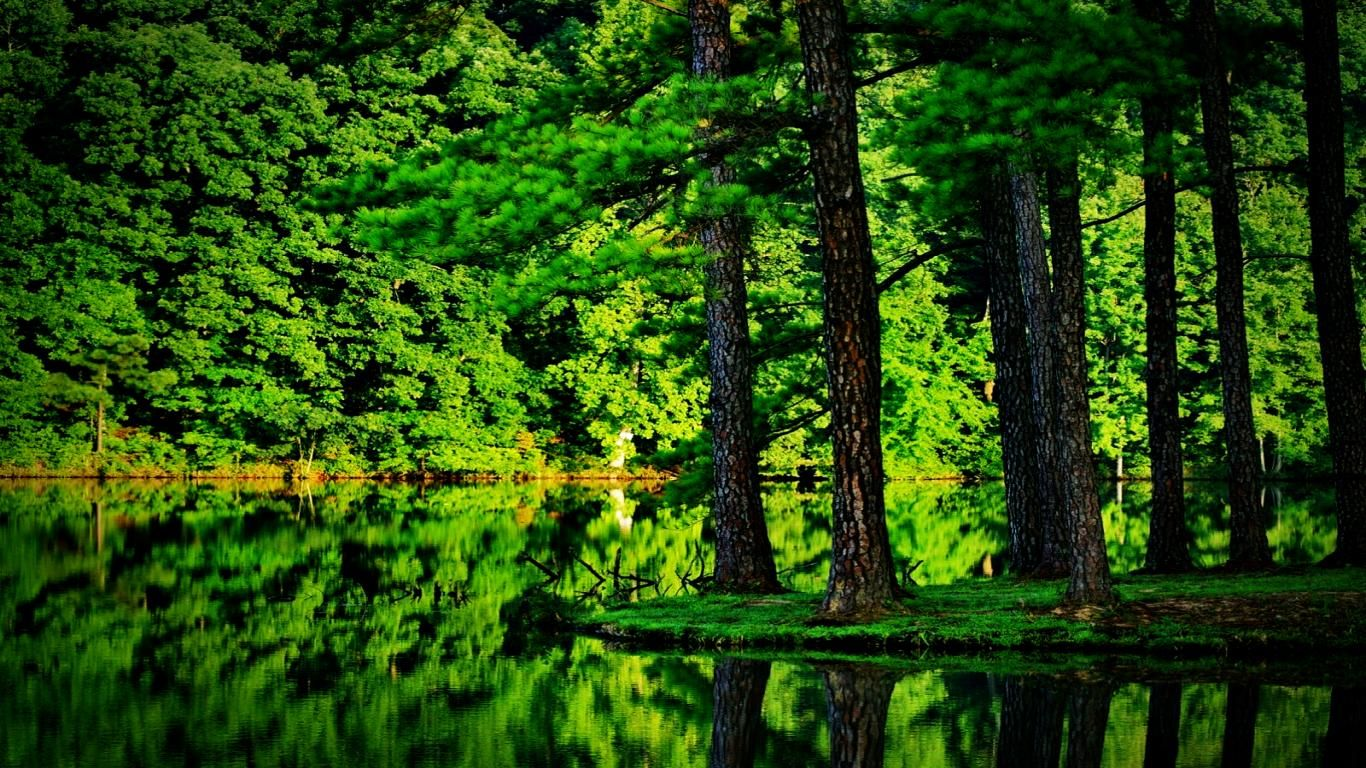 Green Forest Forest Wallpaper Tree Forest Beautiful Forest Hd wallpaper lake tree trunk mountain