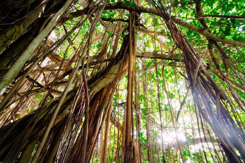 Resultat De Recherche D Images Pour Fleur Tropicale Ile Maurice