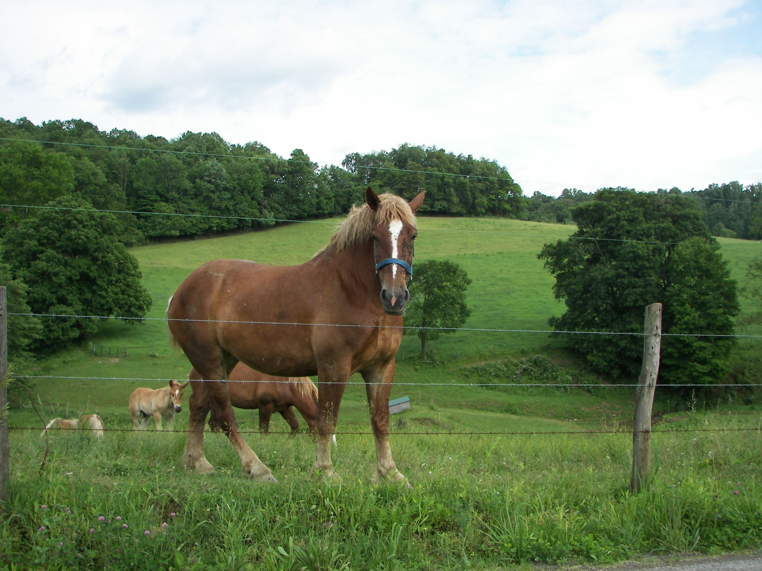 BEAUTIFUL HORSE IN AMISH COUNTRY...