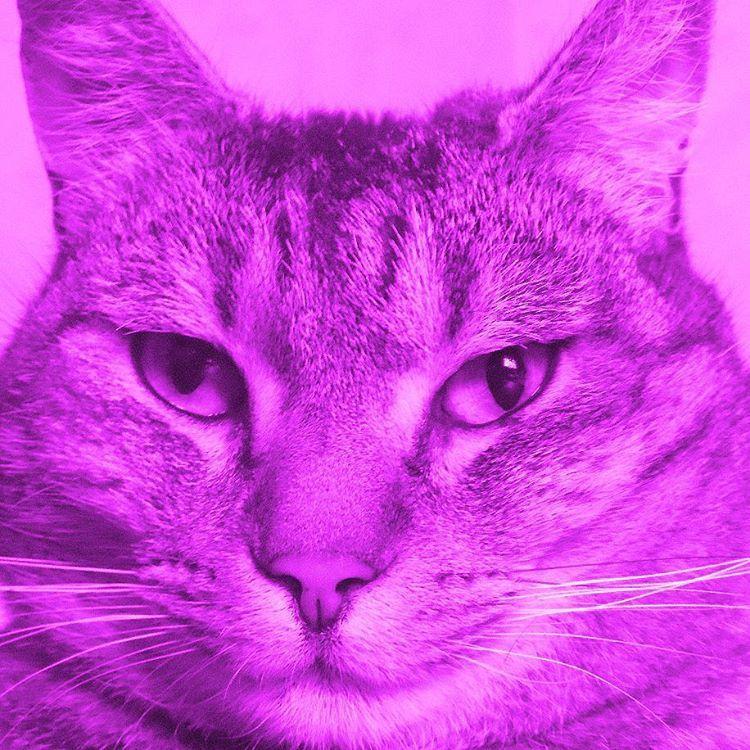 Face Value By Phil Collin S Cat Purple Edition Mollycatfinland Purple Closeup Cat Kissa Katt Katze C Cat Day Cats Of Instagram In The Air Tonight