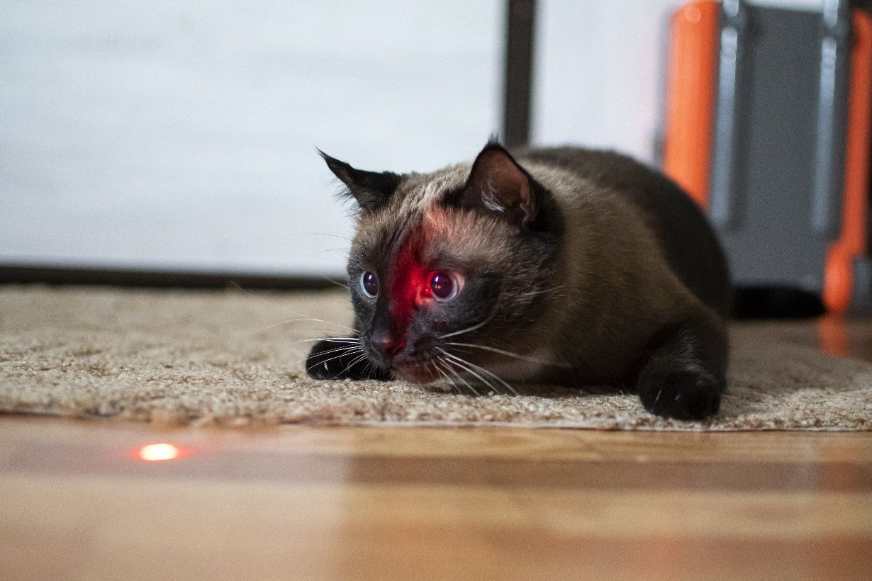 Are laser pointers bad for cats katzenworld in 2020